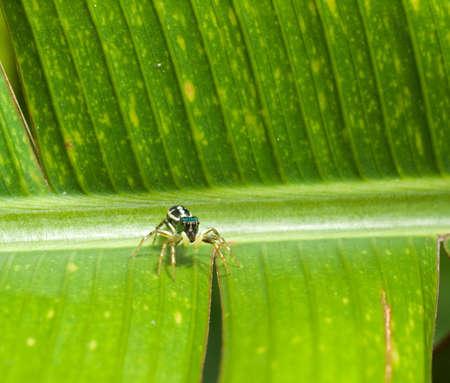 iridescent: Iridescent Spider on Large Leaf Spine