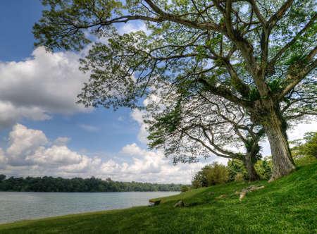 shady: Large Shady Trees