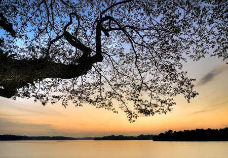 bough: Sunset Under A Bough  Stock Photo