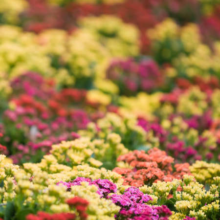 as far as the eye can see: Flowers as far as the Eye can See