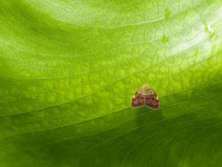 unidentified: Peque�o Bug alado no identificado en la parte inferior de una hoja grande despu�s de una ducha Tropical
