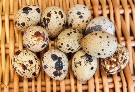 huevos de codorniz: varios huevos de codornices en la cesta Wisker. vista superior