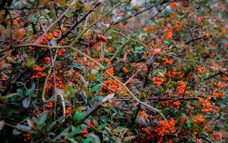 nature photo: Colorful bushes Stock Photo