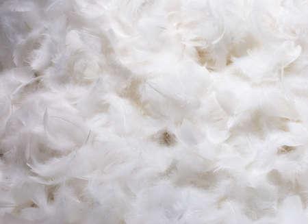 白いふわふわ羽の山のクローズ アップ