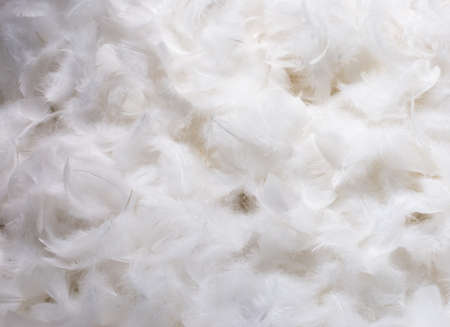white feather: Close-Up of Pile of White Fluffy Feathers