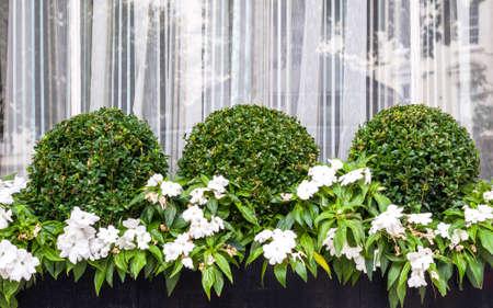 花 & イボタノキ植物を含むタウンハウス ウィンドウ ボックス