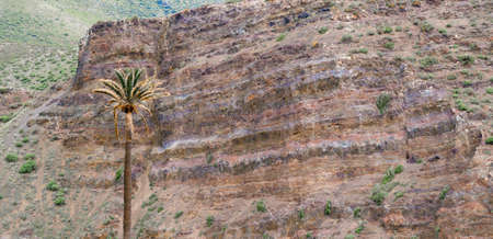 Solitary Palm Tree with Layered Rock  photo