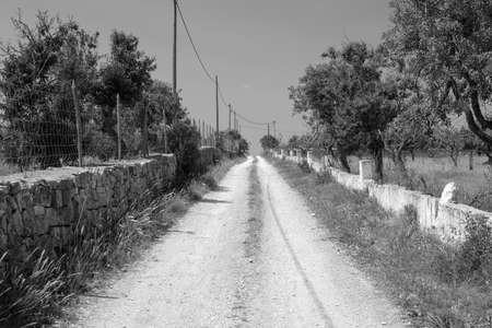 dirt road: Black and White of Dirt Track leading off into distance