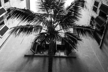 spainish: Black and White Palm Tree in Spainish Villa Courtyard