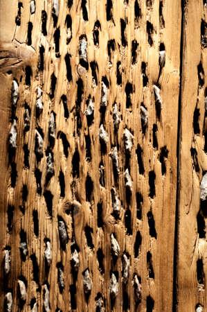 flint: Wooden Board with Embedded Flint Stones Stock Photo