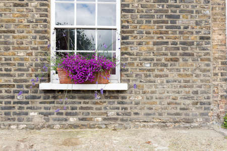 brick house: Pretty Purple Flowers in Window Box of Brick Town House Stock Photo