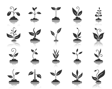 Grass silhouette icons set. Monochrome web sign kit of organic plant. Sprout pictogram collection includes bean soy, pea. Simple vector black symbol. Grass shape icon with reflection isolated on white