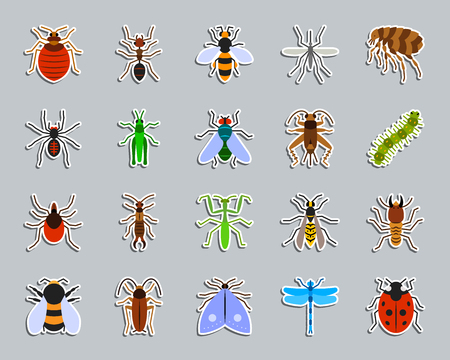 Danger Insect sticker icons set. Web flat sign kit of bed bug. Beetle pictograms includes termite, mole, bedbug. Simple danger insect symbol. Colorful icon for patch, badge, pin. Vector Illustration