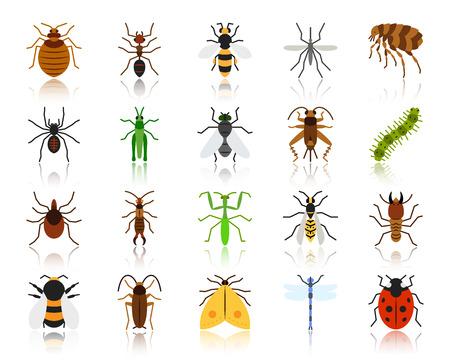 Jeu d'icônes plat d'insectes de danger. Kit de signalisation Web de bogues. La collection de pictogrammes de coléoptère comprend une libellule, une araignée mouche. Symbole d'icône colorée de dessin animé insecte simple danger isolé sur blanc. Illustration vectorielle