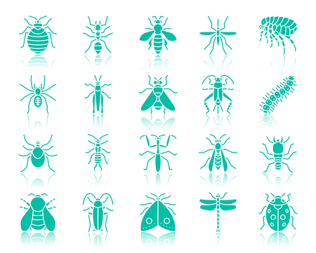 Danger Insect silhouette icons set. Sign kit of bed bug. Bug pictogram collection caterpillar, earwig, aphid. Simple danger insect contour symbol with reflection Vector Icon shape isolated on white