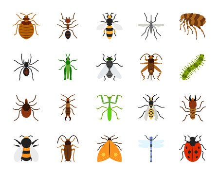 Danger Insect flat icons set. Sign kit of bed bug. Beetle pictogram collection includes dragonfly, fly, spider. Simple danger insect cartoon colorful icon symbol isolated on white. Vector Illustration