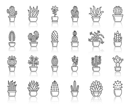 Cactus thin line icons set. Outline web sign succulent kit. Home Plant linear icon collection includes aloe, peyote, cacti. Simple houseplant black contour symbol with reflection vector Illustration