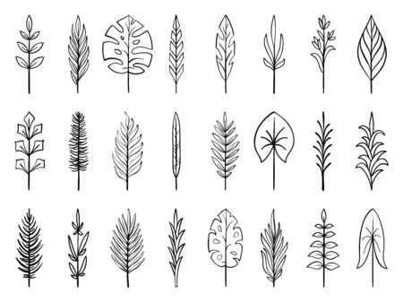 Tropical leaf, floral branch in hand drawn style. Outline doodle icons set. Flower line sign Scribble brush collection Simple wedding design element black contour Vector illustration isolated on white
