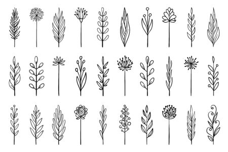 Floral branch in hand drawn style. Outline doodle icons set. Flower line sign. Plant scribble brush collection. Simple sketch wedding design element black contour Vector illustration isolated on white Иллюстрация