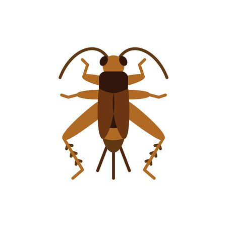 Cricket Bug single flat icon. Grig simple sign in cartoon style. Insect pictogram Wildlife symbol. Entomology closeup color vector illustration isolated on white.