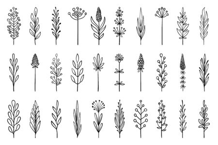 Floral branch in hand drawn style. Outline doodle icons set. Flower line sign. Plant scribble brush collection. Simple sketch wedding design element black contour Vector illustration isolated on white  イラスト・ベクター素材