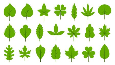 Green leaf flat cartoon icons set. Eco nature organic leaves birch, maple, tropical, poplar, clover isolated on white. Spring, summer tree sprout, tea, flora, herbal, ecology sign. Vector illustration Standard-Bild - 134451021