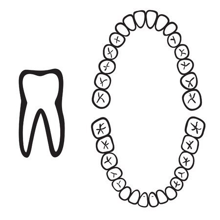 oral: numbers of white isolated tooth  illustration