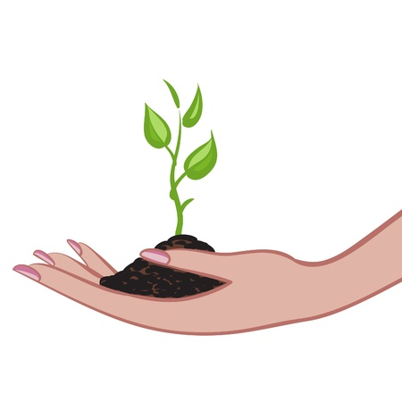 small plant: Growing green plant in palm as a symbol of nature protection  Illustration