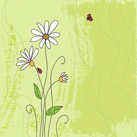 Ladybug on chamomile flower and grunge green grass background