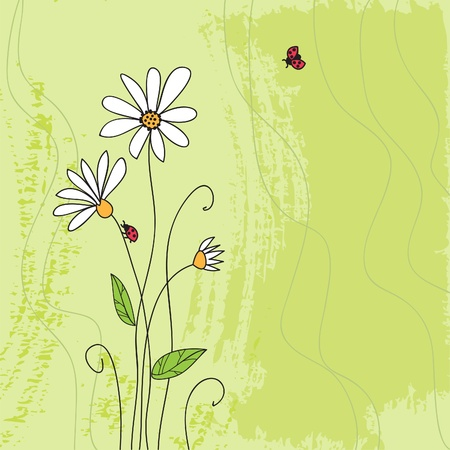 chamomile flower: Ladybug on chamomile flower and grunge green grass background