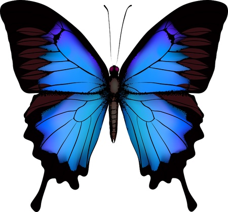 Blue butterfly papilio ulysses (Mountain Swallowtail) isolated