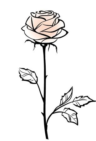 Beautiful single pink rose flower isolated on the white  background Illustration