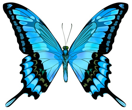 Belle papillon bleu isolé