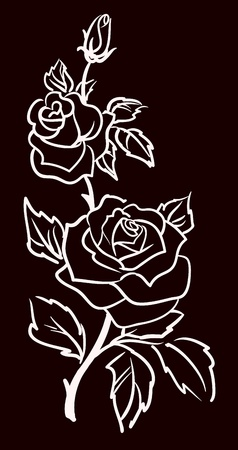 three white roses  isolated on black  background, illustration  Vector