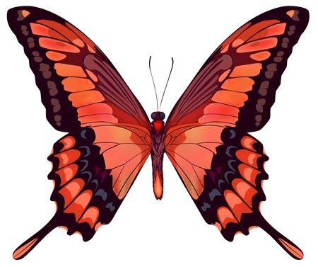 single flower: Beautiful vector isolated red butterfly