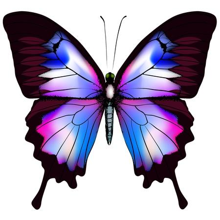 papillon rose: Beau papillon bleu isolé