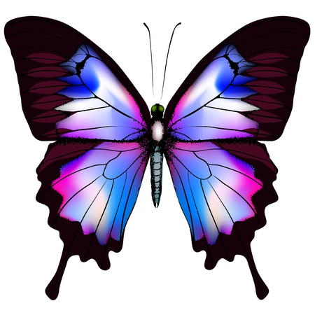 pink and black: Beautiful isolated blue butterfly Illustration