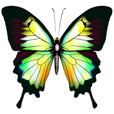 Isolated Butterfly Vector Stock Vector - 12774815