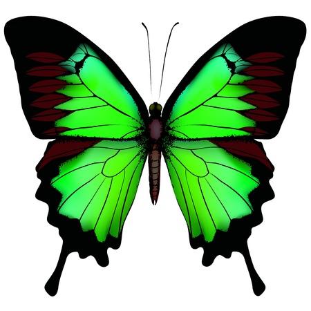 白い背景で隔離の美しい緑蝶のベクトル イラスト