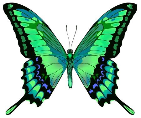 白い背景で隔離の美しい青い緑蝶のベクトル イラスト