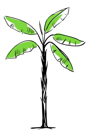 banana leaf: Tropical Palm Tree Isolated on White Background Illustration