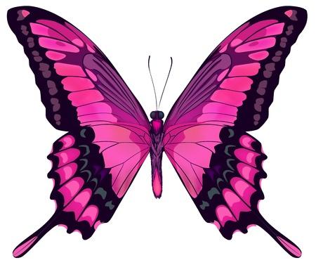 흰색 배경에 고립 된 아름 다운 핑크 나비 그림