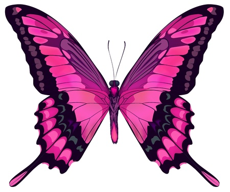 butterfly background: illustration of Beautiful Pink Butterfly Isolated on White Background