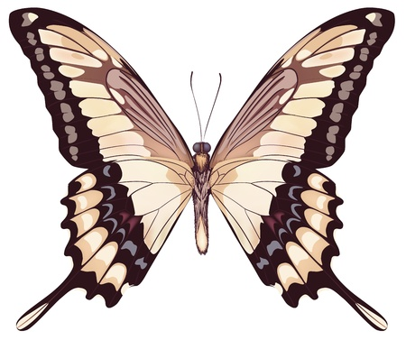 Isolated Light Butterfly  Illustration