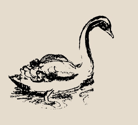 Swan Sketch. Grunge illustration Vector