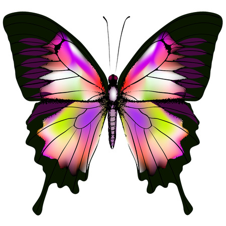Isolated Butterfly Vector Illustration Stock Vector - 25234886