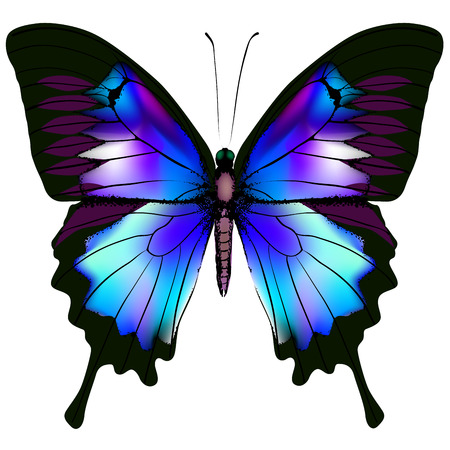 Isolated Butterfly Vector Illustration Stock Vector - 25234899