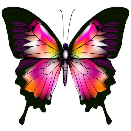 Ejemplo de la mariposa aislada
