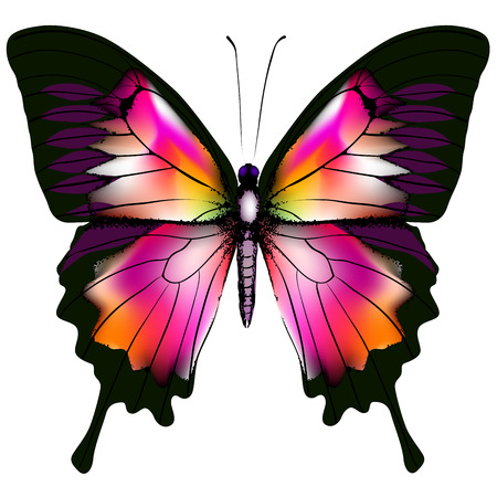 Izolowane Butterfly Ilustracja