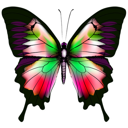 Isolated Butterfly Vector Illustration  Vector